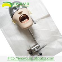 Fabricante competitivo del modelo de la cabeza dental del precio competitivo de alta calidad EN-U6 en China