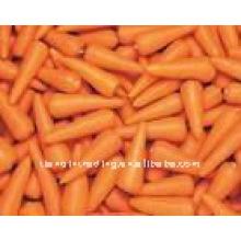 новый морковь из Китая