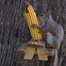 GIBBON ET-720729 Table de pique-nique écureuil de grande taille, durable avec mangeoires à écureuil à structure solide pour l'extérieur, jardin