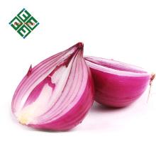 exportadores de cebollas frescas en China