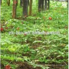 100% Nature Gymnema Sylvestre Extrato