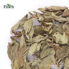 Finch Nouvelle arrivée Herb Tea Dry Mint Feuille entière