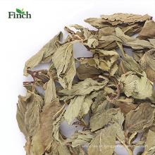 Folha inteira nova da hortelã do chá de erva do passarinho da chegada do passarinho