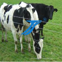 Cerca galvanizada de alta qualidade do prado do cavalo / rede de Kraal /