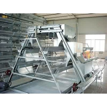 SHINE A Type Layer Cages