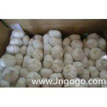 Exportar nueva cosecha fresca buena calidad ajo blanco normal