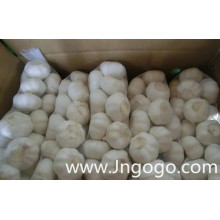 Export New Crop Fresh Good Quality Normal White Garlic