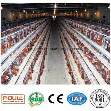Layer Chicken Cage Hot Sale in Nigeria