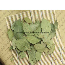 Bay Leaves, Bay Leaves Powder