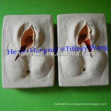Modelo de Práctica de Suturas ISO Vulva, Entrenador de Episiorrhaphy