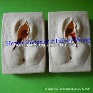 ISO Vulva Suturing Practice Model, Episiorrhaphy Trainer