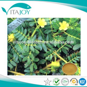 Productos para el cuidado de la salud Tribulus Terrestris Extract 20% & 40% Protodioscin con EE.UU. stock de entrega rápida!