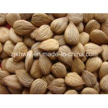 Sweet Almond (youyi 680 PCS/500g)
