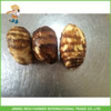 Shandong Maischebeutel Frischer Taro