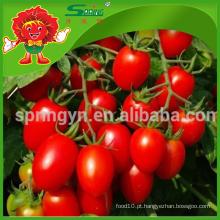 Exportação de produtos agrícolas Especificação tomate vermelho cereja fresco
