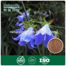 Natural Adenophora Root Extract Powder,Adenophora Root P.E.5:1 10:1