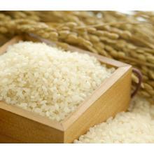 riz rond de grain court de haute qualité pour la nourriture japonaise de sushi
