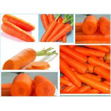 Желтый и свежий сладкий морковь из Китая