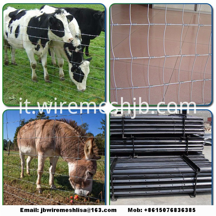 Galvanized Cattle Fence And Kraal Network