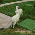 simulation fiberglass animal sculpture-sheep