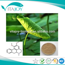 Professional Manufacturer 10:1 Lotus Leaf extract powder/ 10:1 Lotus Leaf p.e./ Lotus Leaf extract 10:1
