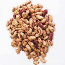 Best Dry Pinto Beans or (Long Shape) Size 200-220 pcs Light Speckled Kidney Beans