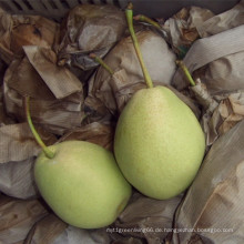 Grüne Farbe frische Shandong Birne aus China
