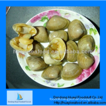 fresh frozen delicious surf clam superior provider