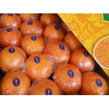 Exportación (GLOBALGAP HACCP) Pomelo fresco