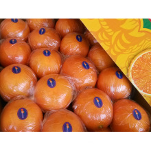 Fresh First Quality Navel Orange