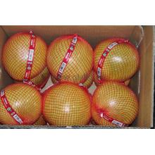 Nouvelle pomme de miel fraîche et récolte