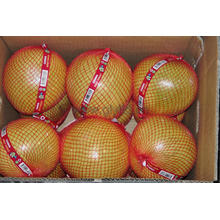 Nova colheita Fresh Honey Pomelo