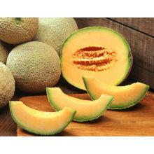свежие фрукты свежие дыни хами дыни горячего водоснабжения