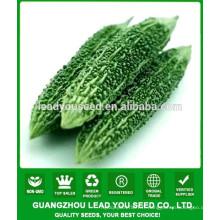 Fournisseur de graines de melon amer NBG03 Changjian hybride