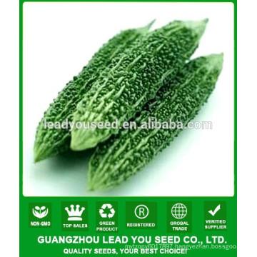 NBG03 Changjian hybrid bitter melon seeds supplier