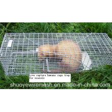 Cage pliable de rongeurs de cage de pièges d'animal multi attrape