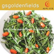 Las verduras frescas de goji berry sprout son útiles para la salud
