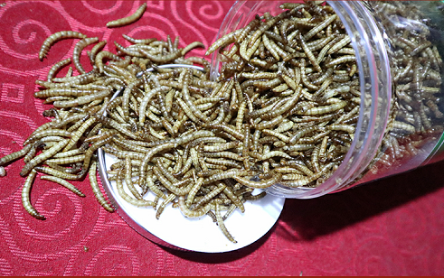 Ocean fish feed