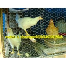 Maillage Hexagonal De Bonne Qualité (Chiken Nettting)