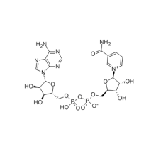 Hot Sale Beta-Diphosphopyridine nucleotide CAS 53-84-9