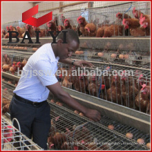 Jaula de la capa / equipo de las aves de corral de la jaula de engorde para la granja de pollo