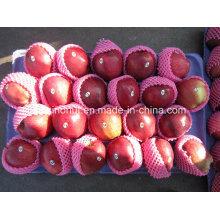 Frische Huaniu Apfel