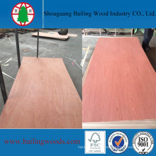 Red Pencil Cedar EV Red Elm / Bintangor Plywood