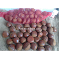 export 2015 new harvest fresh chinese chestnut with big kernel