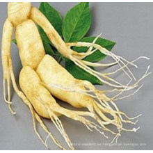 Halal Panax Extracto de Ginseng 6-10% Ginsenosidos HPLC / UV