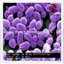 Saccharomyces Boular...