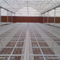 Greenhouse Rolling Bench for seedling nursery
