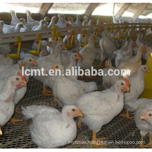 Manufacturer best quality chicken floor raisng equipment for sale