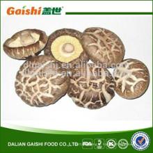 Champignons de champignons comestibles, bon goût champignons shiitake séchés