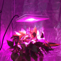 cob led grow light shenzhen wenyi 50w grow